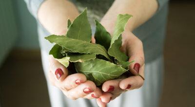 8 benefícios surpreendentes da folha de louro para a sua saúde