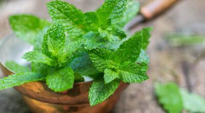Hortelã: mais saúde, frescor e sabor para suas receitas