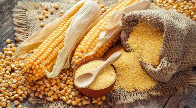 Farinha de milho: 6 benefícios e dicas de como usar