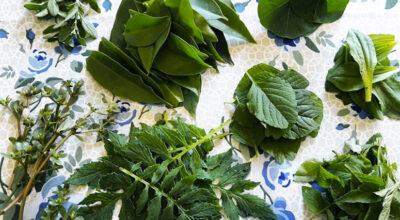 Já ouviu falar em PANCs? Conheça 11 plantas que você pode comer e não sabia