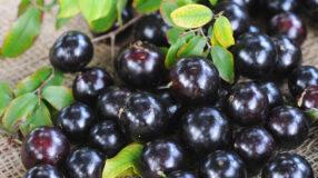 7 benefícios da jabuticaba que vão te deixar apaixonada por essa frutinha