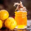 10 benefícios do óleo de pequi que irão te surpreender