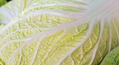 Acelga: surpreenda-se com 14 benefícios fantásticos desse ingrediente