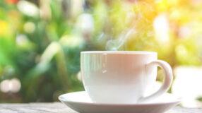 Chá de carqueja: conheça seus benefícios para o dia a dia