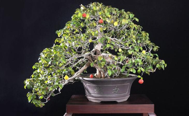 Como cuidar de um bonsai 8 dicas b sicas e fundamentais - Como cuidar bonsais ...