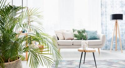 Plantas para sala: o toque natural de estilo que seu ambiente precisa