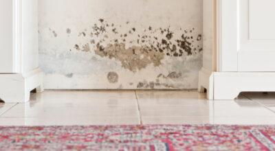 Como tirar cheiro de mofo: 10 técnicas para manter sua casa sempre cheirosa