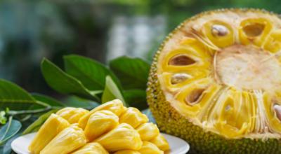Descubra os benefícios da jaca e seu poder nutricional da folha até o caroço
