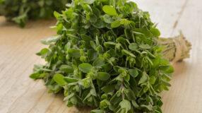Manjerona: 8 benefícios e usos para você conhecer esta erva poderosa